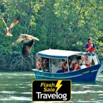 Langkawi: Mangrove Tours Packages