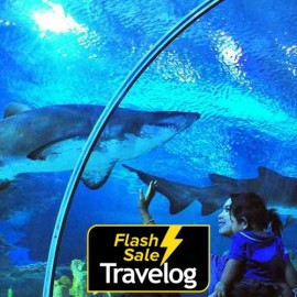 image of Langkawi: Underwater World Admission Ticket