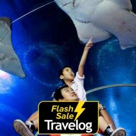 image of Pattaya: Underwater World Pattaya Admission Ticket