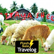 image of Chonburi: Pattaya Sheep Farm Admission Ticket