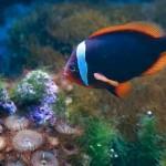 Langkawi: Underwater World Admission Ticket