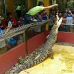 Langkawi: Wildlife Park Admission Ticket
