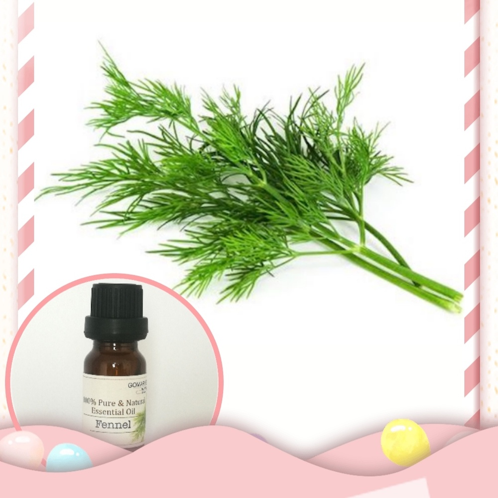 100% Pure Fennel Essential Oil