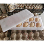 Kampung Egg Grade B/Guarantee Safe Shipping/limited stock for every batch