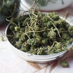 Organic Panax Flowers 有机田七花