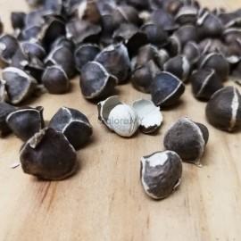 image of Moringa Seeds 100g 500g 1kg | India Moringa Seed | 辣木籽 Can Eat, Can Plant into Moringa Tree