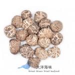Tea Flower Mushroom 仿木茶花菇AA级 (4-5cm)