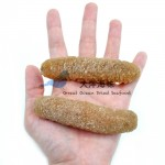 Sea Cucumber- Disco 40/45 沙隆玻璃参 40/45支 (300g-1kg)