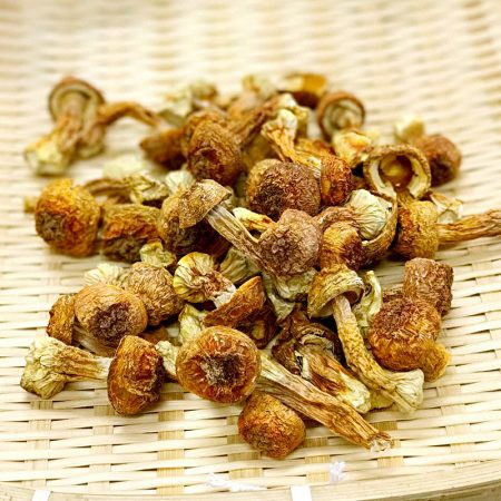image of Agaricus Subrufescens姬松茸 100G