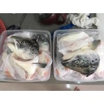 Pre-order Fresh Imported Atlantic Salmon