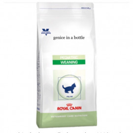 image of Royal Canin Kitten Pediatric Weaning 400G/ Untuk Kucing