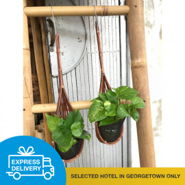 image of 【Express Delivery】Hanging Pot