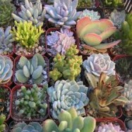 image of Succulent plant random